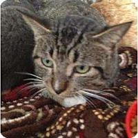 Adopt A Pet :: Berl - Mobile, AL