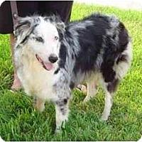 Adopt A Pet :: Bryleigh - Orlando, FL