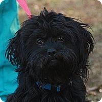 Adopt A Pet :: Bear (esther) - Brattleboro, VT