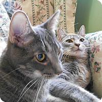 Adopt A Pet :: Sony & Cher - Richland, MI