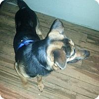 Adopt A Pet :: Rex (Guest) - Roswell, GA