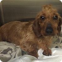 Adopt A Pet :: Jameson - Oak Ridge, NJ