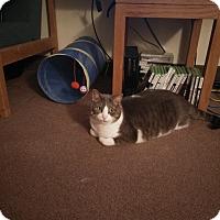 Adopt A Pet :: Cooper - Toronto, ON