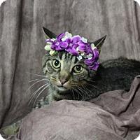 Adopt A Pet :: Battleship - Chicago Heights, IL