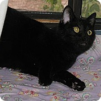 Adopt A Pet :: Hannah - Gilbert, AZ