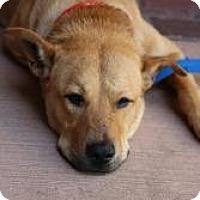 Adopt A Pet :: Sunny - Justin, TX