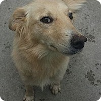 Adopt A Pet :: Chloe*ADOPTED!* - Chicago, IL