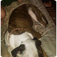 Adopt A Pet :: Lily - courtesy post - Cincinnati, OH