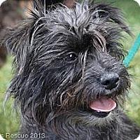 Adopt A Pet :: MAMA K - Broomfield, CO