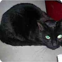 Adopt A Pet :: Sabrina - Markham, ON