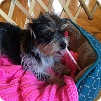 Adopt A Pet :: Blair - Homewood, AL