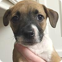 Adopt A Pet :: Calypso#08F - Orlando, FL
