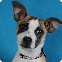 Adopt A Pet :: Renny - Minneapolis, MN