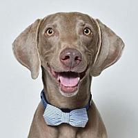 Adopt A Pet :: Cooper 4 - Birmingham, AL