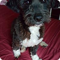 Adopt A Pet :: SCAMP - Winnetka, CA