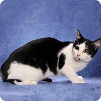 Adopt A Pet :: Stripe - Seminole, FL