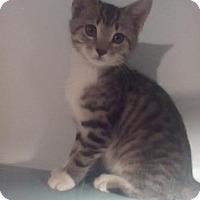 Adopt A Pet :: Alvin - Kirkwood, DE