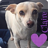 Adopt A Pet :: Claire - Snyder, TX