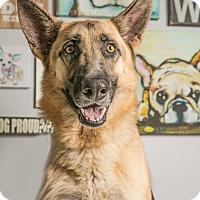 Adopt A Pet :: Junior - Inglewood, CA