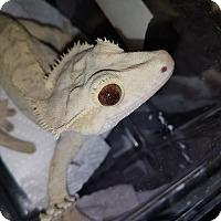 Adopt A Pet :: Enchilada - Santa Clarita, CA