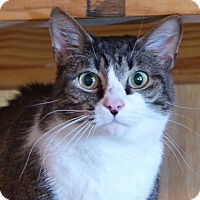 Adopt A Pet :: Patrick - Monterey, VA