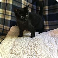 Adopt A Pet :: Mouse - Hampton, VA