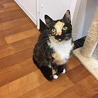 Adopt A Pet :: Nikita - Joplin, MO
