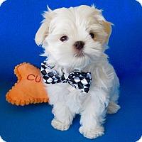Adopt A Pet :: Jackson - Irvine, CA