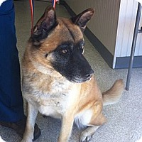 Adopt A Pet :: Coco - Adopted! - Hayward, CA