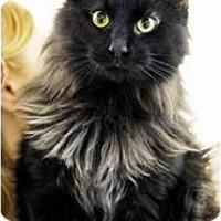 Adopt A Pet :: Troy - Arlington, VA