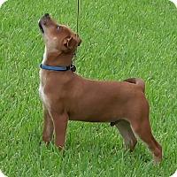 Adopt A Pet :: Dale - Kingwood, TX