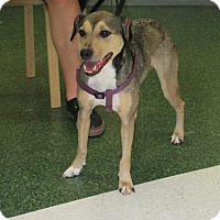 Adopt A Pet :: Libby Lou - Dallas, TX