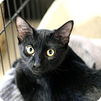 Adopt A Pet :: Sister Sky - Chicago, IL