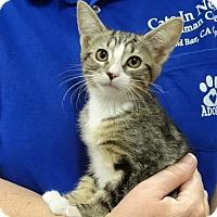 Adopt A Pet :: JACKIE - Diamond Bar, CA