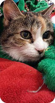 Domestic Shorthair Cat for adoption in Battle Ground, Washington - Emma