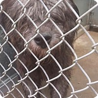 Adopt A Pet :: #327-16 - RESCUED! - Zanesville, OH