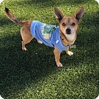 Adopt A Pet :: Jelley Bean - Las Vegas, NV