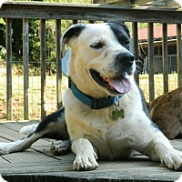 Adopt A Pet :: flinch -$100 - Hagerstown, MD