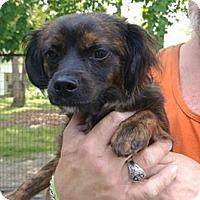 Adopt A Pet :: Wilow - Waxhaw, NC