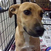 Adopt A Pet :: Nala - Jamestown, TN