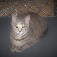 Adopt A Pet :: Sky - Columbia, TN