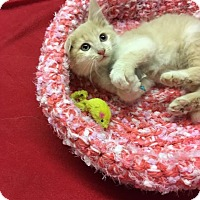 Adopt A Pet :: Colby - Butner, NC