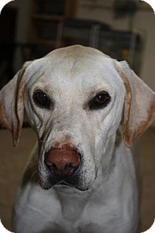 Mountain Cur Mix Dog for adoption in Stilwell, Oklahoma - Boomer