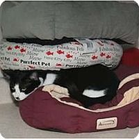 Adopt A Pet :: Skeffington - Cincinnati, OH