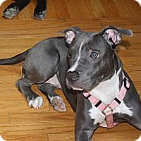 Adopt A Pet :: SAMANTHA Itty Bitty & Perfect! - Durham, NH