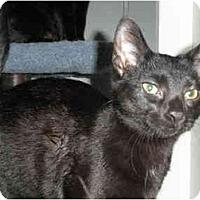 Adopt A Pet :: Kelly - Milwaukee, WI