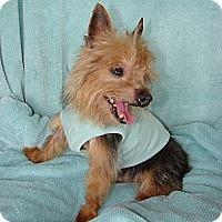 Adopt A Pet :: Sparky - Palm City, FL