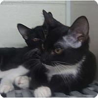 Adopt A Pet :: Hobbs & May - Winter Haven, FL
