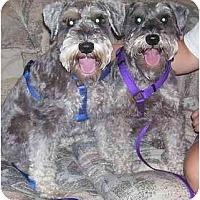 Adopt A Pet :: Willie - Chandler, IN