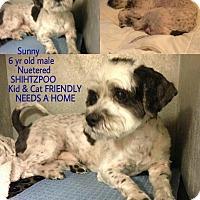 Adopt A Pet :: Sunny - Garwood, NJ